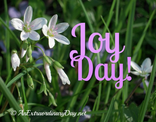Joy Day! {spring wildflowers} :: AnExtraordinaryDay.net