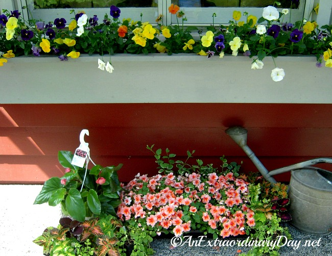 Planting a window box container garden :: AnExtraordinaryDay.net
