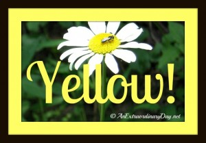 An Extraordinary Day | Inspiration Workshop - Yellow!