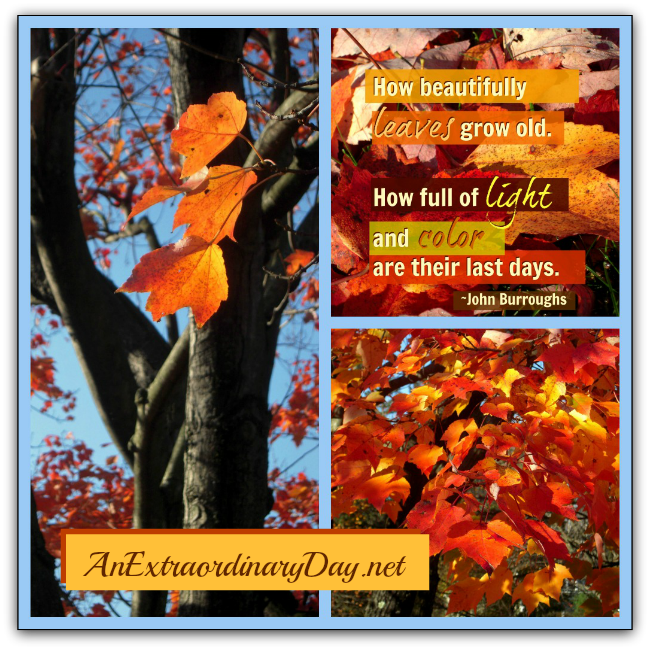 AnExtraordinaryDay.net {31 Extraordinary Days} Of Light & Leaves | Autumn Photos & Quote