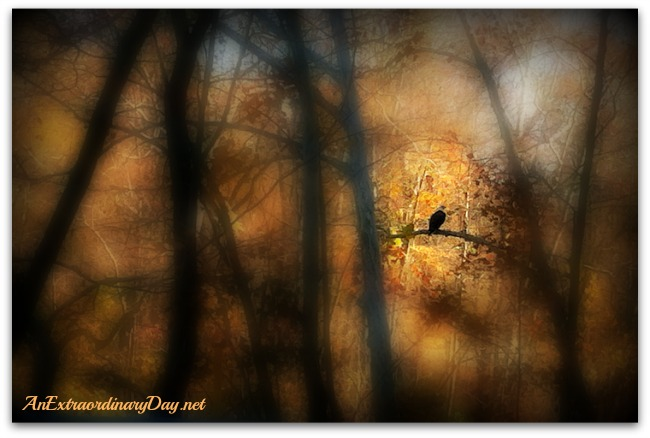 AnExtraordinaryDay.net -|31 Extraordinary Days | On Eagle's Wings | Bald Eagle Photo