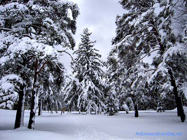 Snow on the Pine Trees - Chestnut Ridge in Winter - AnExtraordinaryDay.net