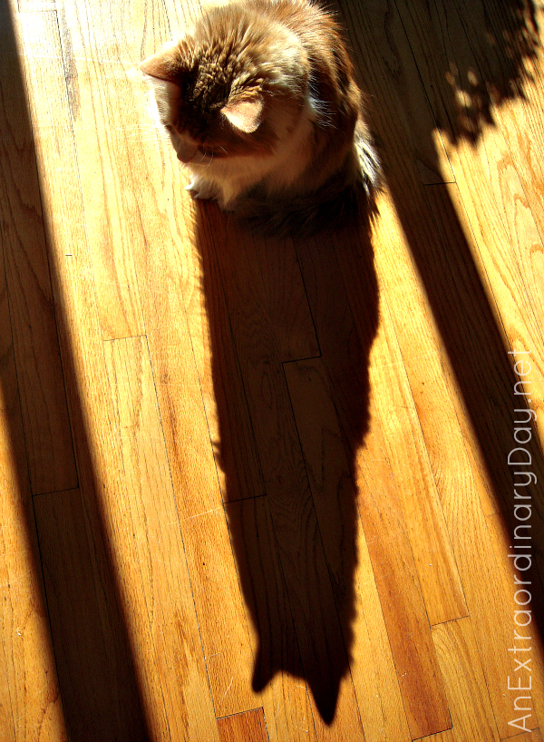 Just Me and My Shadow :: Orange Cat :: AnExtraordinaryDay.net