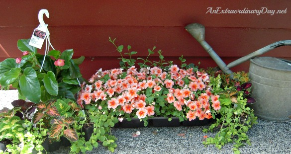 Plant selection for planting a window box :: AnExtraordinaryDay.net