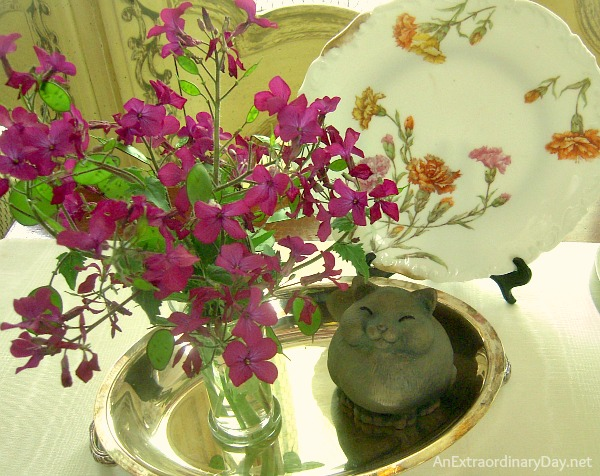 Lunaria : Money Plant : Honesty :: Whatever you call them make lovely cut flowers :: AnExtraordinaryDay.net
