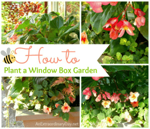 Tips to Learn How to Plant a Window Box Garden - Tips & Tutorial