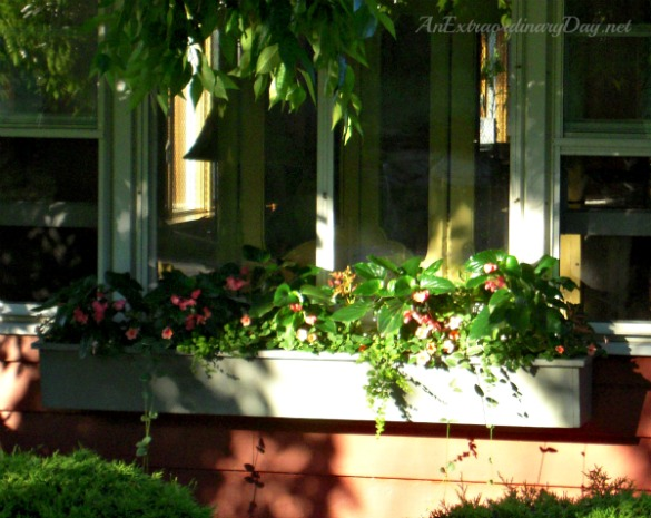 Window Box Garden :: AnExtraordinaryDay.net