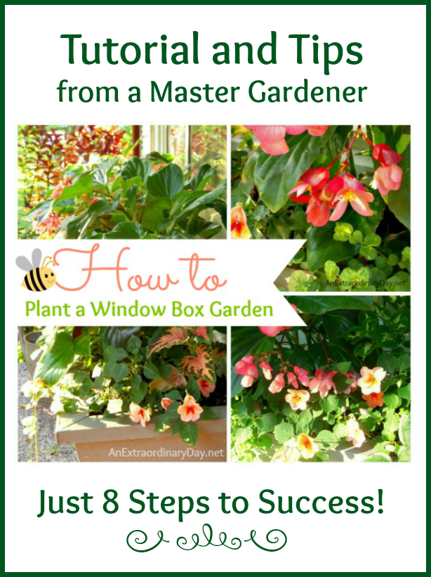 Tips and Tutorial for planting a window box garden from a master gardener.