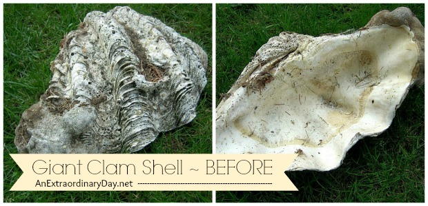 Giant Clam Shell :: BEFORE - Ditto DIY Challenge :: AnExtraordinaryDay.net