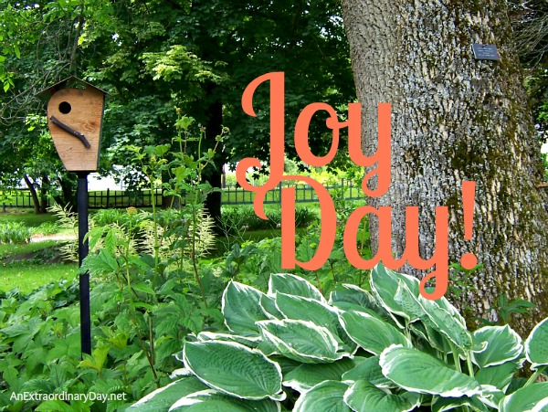 #JOY :: A Place of Safety ::Joy Day! :: AnExtraordinaryDay.net
