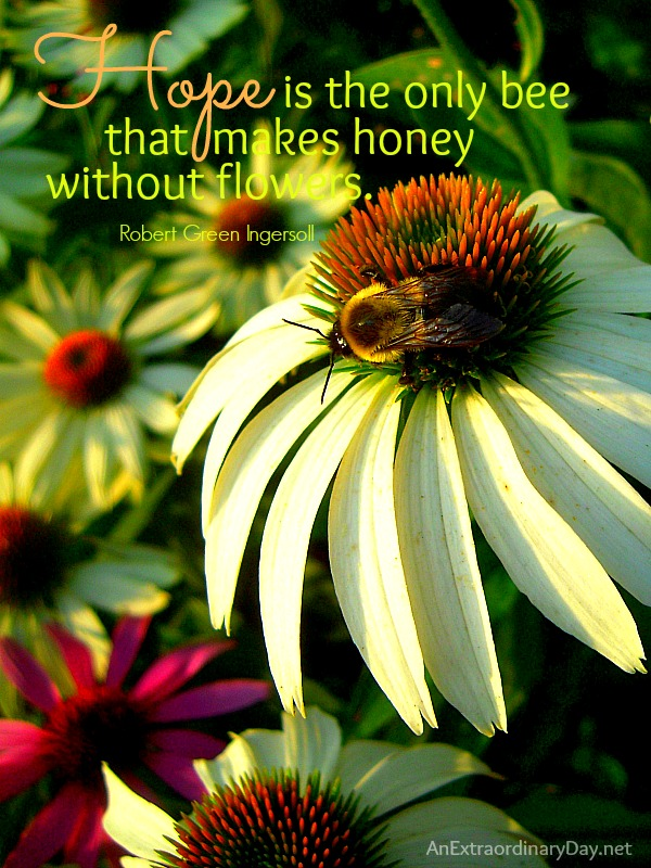 Hope is the only bee that makes honey without flowers - Quote :: #Bee #Honey # Hope :: AnExtraordinaryDay.net