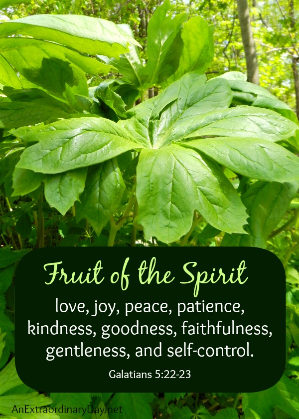 The Fruit of the Spirit :: Fragrance of Christ :: AnExtraordinaryDay.net