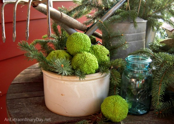 Garden themed Christmas vignette with o'sage oranges at AnExtraordinaryDay.net