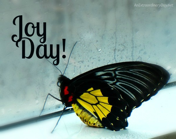 How to Glorify God with Butterfly Wings - JOYDAY! || Golden Birdwing Butterfly