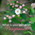 The fragrance of Christ - What is your personal fragrance - AnExtraordinaryDay.net