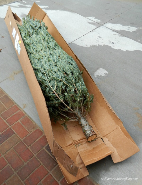 Nautical Christmas Tree Pops out of its Box