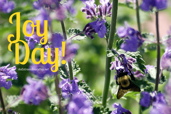 Busy Bee gathering nectar on Catmint - JoyDay! devotional at AnExtraordinaryDay.net