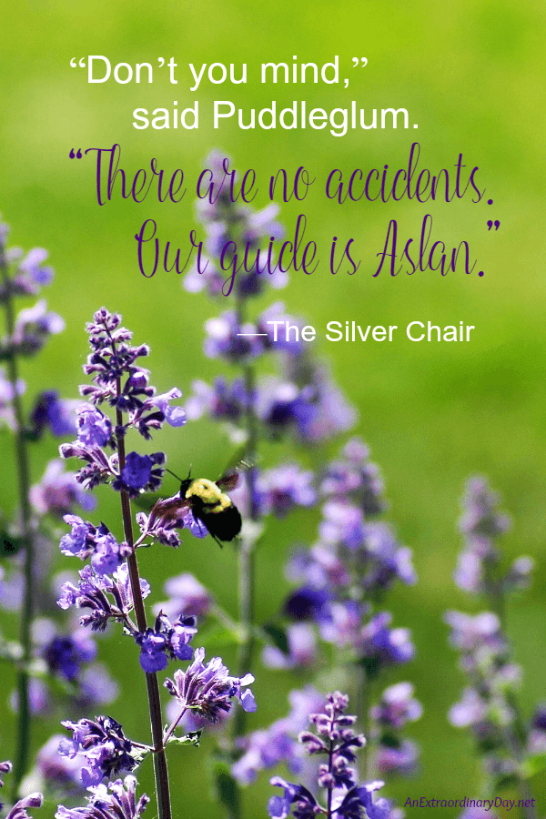 C.S. Lewis quote from The Silver Chair -- There are no accidents. Our guide is Aslan. From a devotional meditation at AnExtraordinaryDay.net