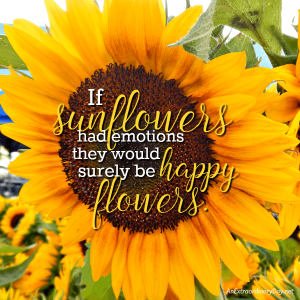 Why do we see happiness in a cheery sunflower? | JoyDay!