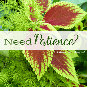 Does it Sound Crazy? I Quit Praying for Patience | JoyDay!