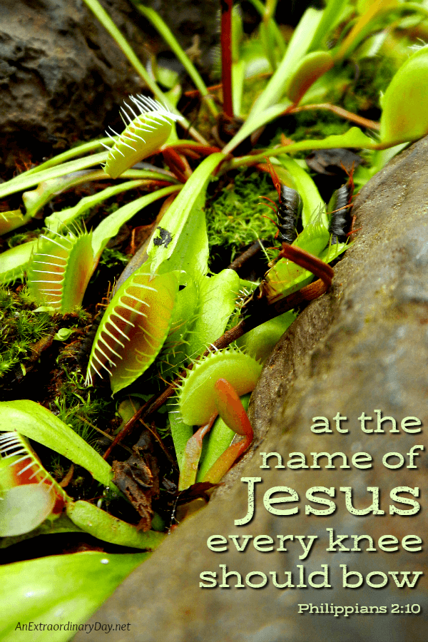 Scripture Verse Image - at the name of Jesus every knee should bow