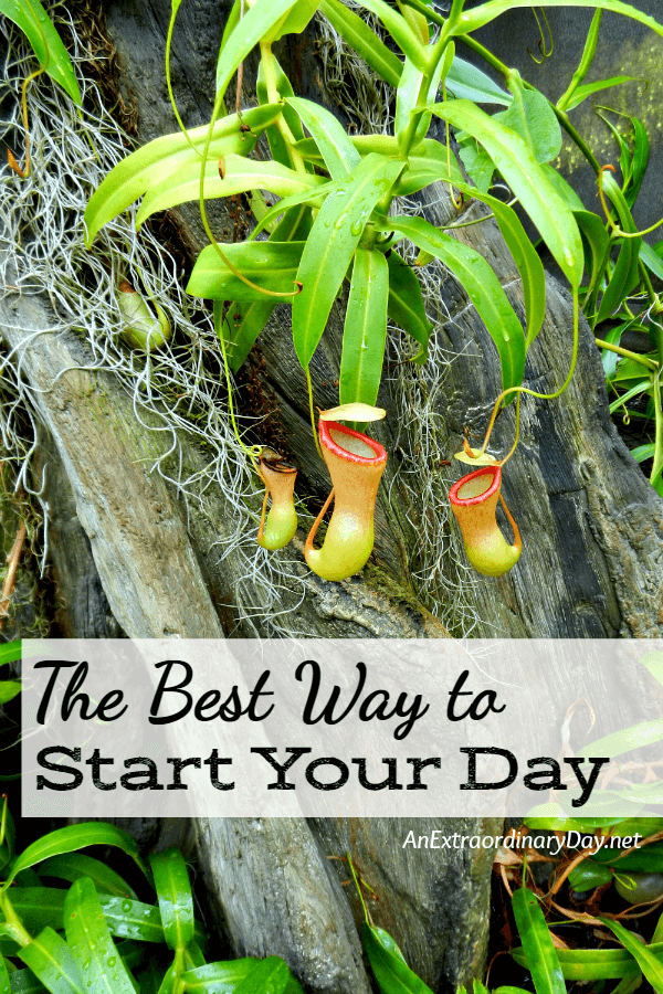 The Best Way to Start Your Day - The Best Way to Start Your Day - A Brief Devotional with TIPS to Help You Start Your Day on the Right Foot.