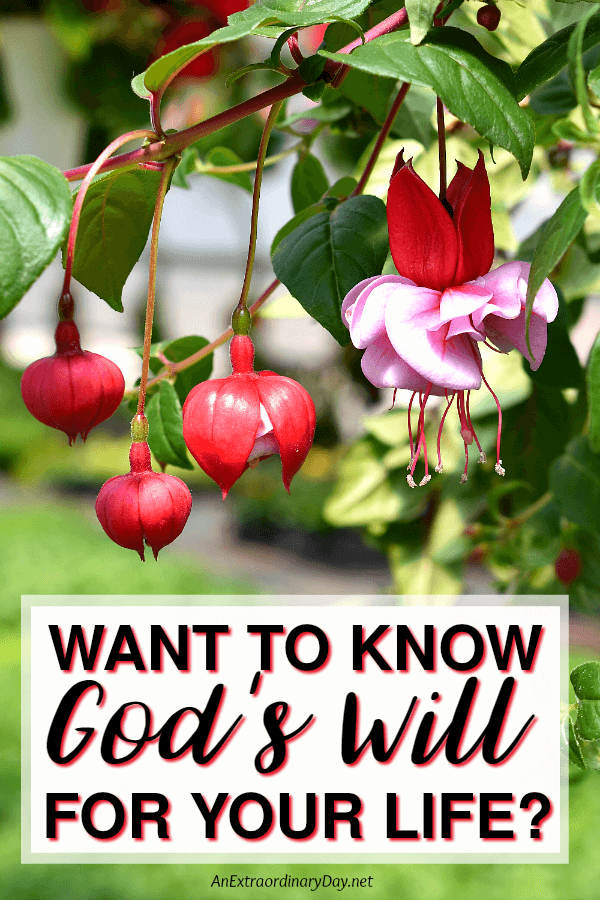 4 Tips for Knowing God's Will for Your Life