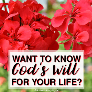 Want to Know God's Will for Your Life? | JoyDay!