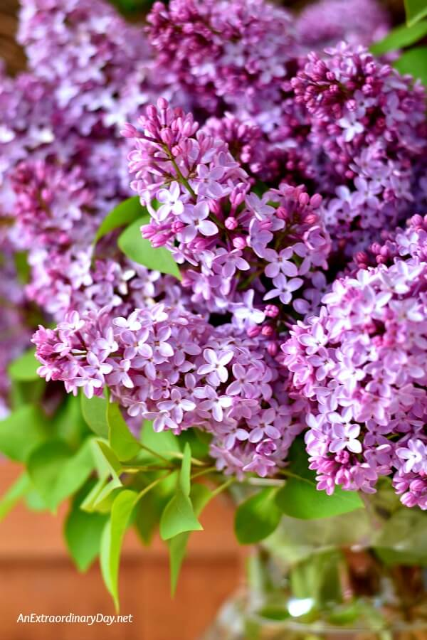 Breathe in beauty and release stress with a bouquet of lilacs