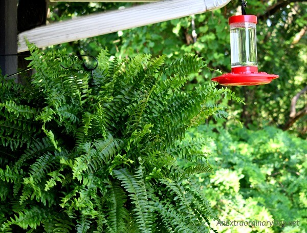 A hummingbird feeder is perfect for a small space garden - what a delight to get visitors