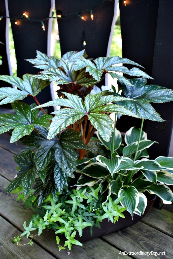 Choose indoor and outdoor plants for summer container gardens for more visual interest in small space container gardening