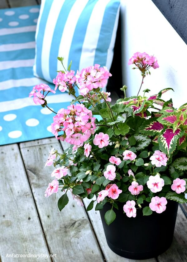 Colorful containers with a mix of flowers and foliage bring color and depth to a small patio or balcony