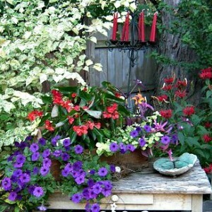 Container Gardening Ideas - 9 Tips - AnExtraordinaryDay.net