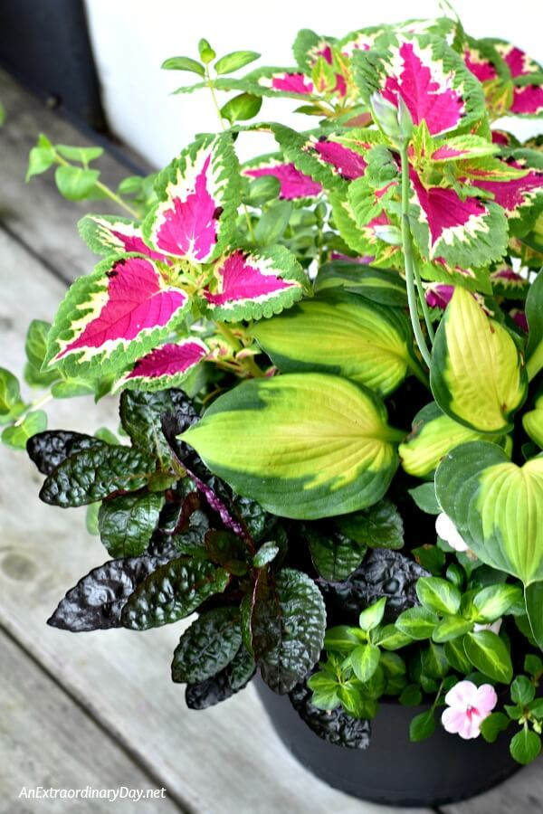 Creating container gardens with few flowers but lots of lovely leafy plants adds so much to a small outdoor space