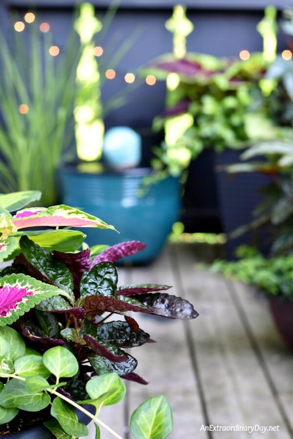 Twinkling lights add sparkle and depth to a small balcony garden even during the daytime