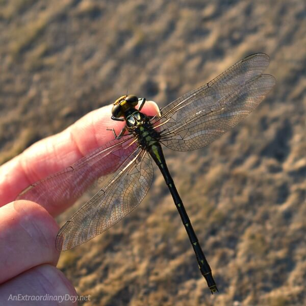 Dragon fly | The unrealistic reach for perfection